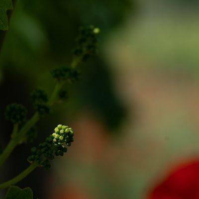 Biodiversità a Frecciarossa - Foto di Alessandro Beltrame